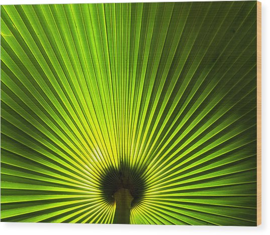 Palm Leaf Wood Print