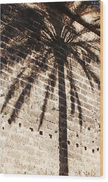 Palm Shadow Wood Print