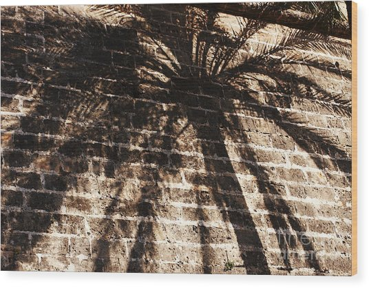 Palm Tree Cup Wood Print