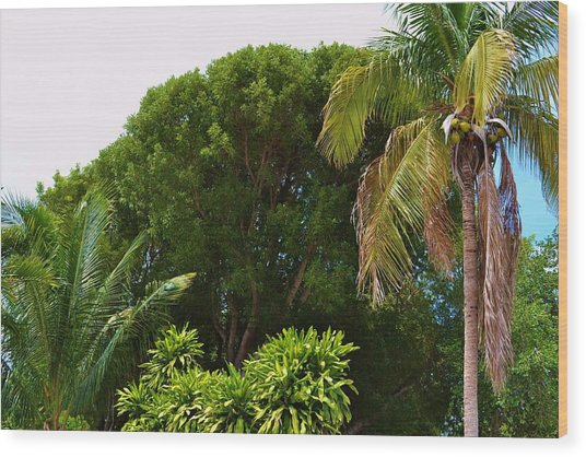 palm tree Key west Wood Print by Josee Dube