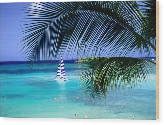 Palm Tree, Swimmers And A Boat At The Beach, Waikiki, United States Of America Wood Print by Ann Cecil