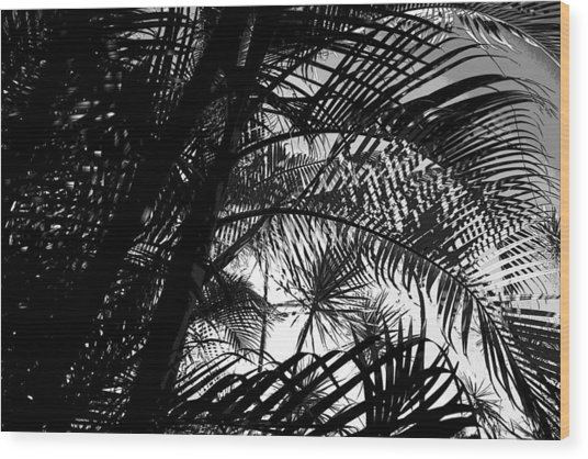 Palm Trees Wood Print by Colleen Cannon