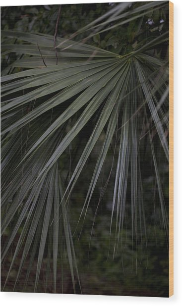 Palms Wood Print by Christina Durity