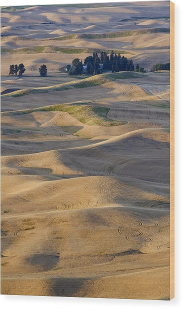 Palouse Harvest Wood Print