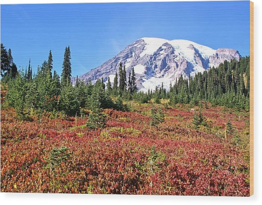 Paradise In Fall On Mt. Rainier  Wood Print