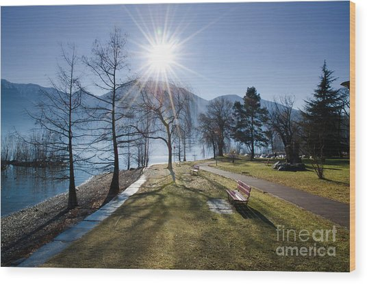 Park On The Lakefront Wood Print