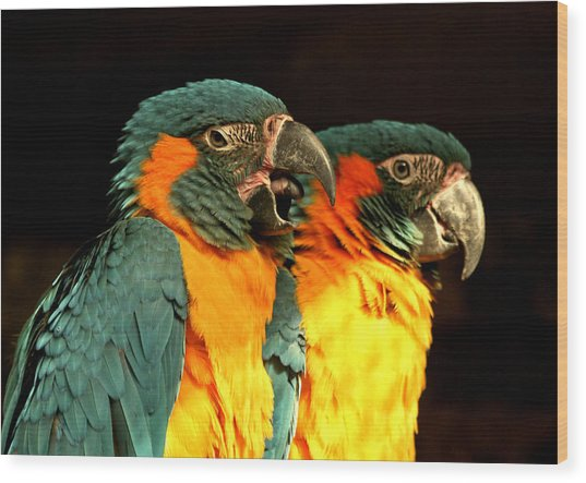 Parrot Wood Print by Amr Miqdadi