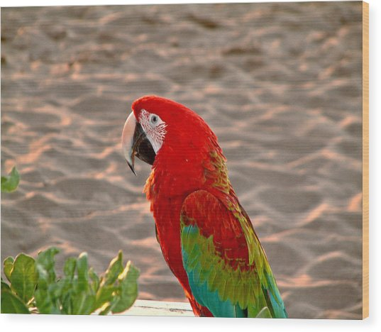 Parrot In Maui Wood Print