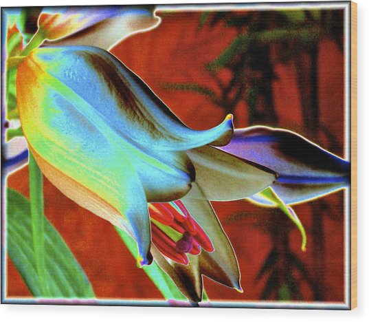 Party Lily Closd Wood Print