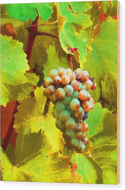 Paschke Grapes Wood Print