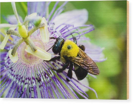 Passion Fruit Flower And Bee Wood Print