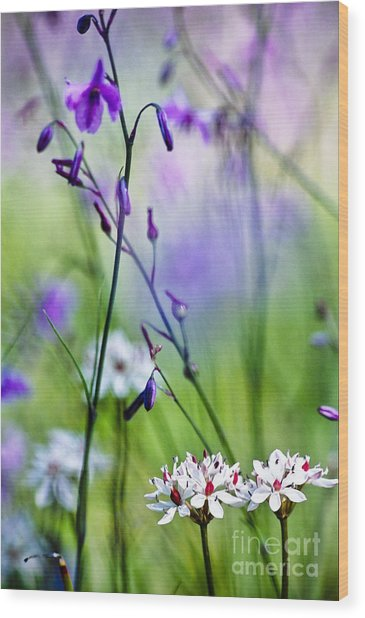 Pastel Wildflowers Wood Print by David Lade