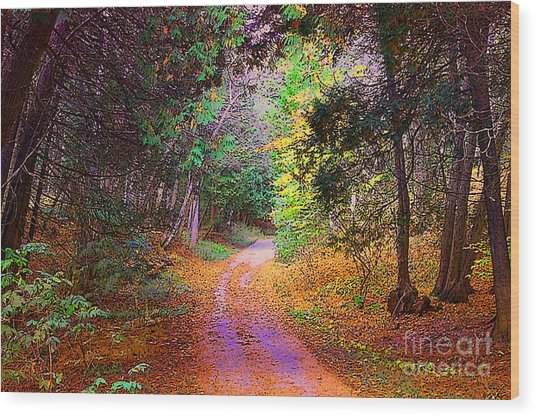 Path In The Woods Wood Print