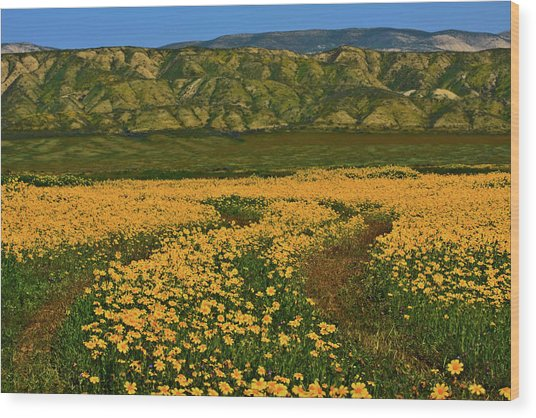 Path Through The Wildflowers Wood Print