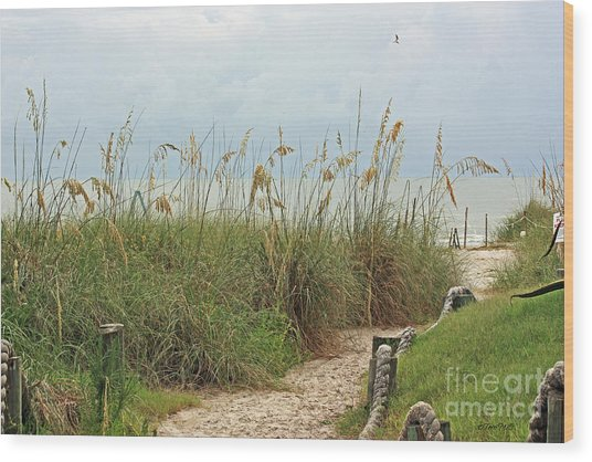 Pathway To The Gulf Wood Print