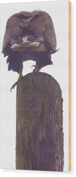 Pausing To Ponder Wood Print