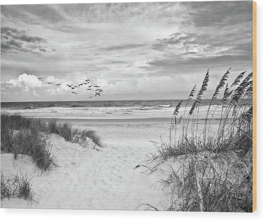 Pawleys Island - Pelican Flyway Wood Print