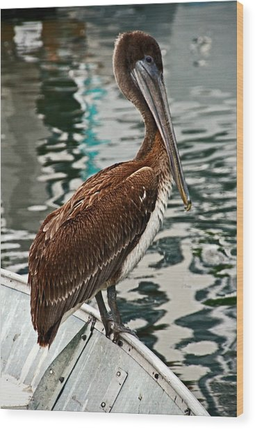 Peaceful Pelican Place Wood Print by Donna Pagakis