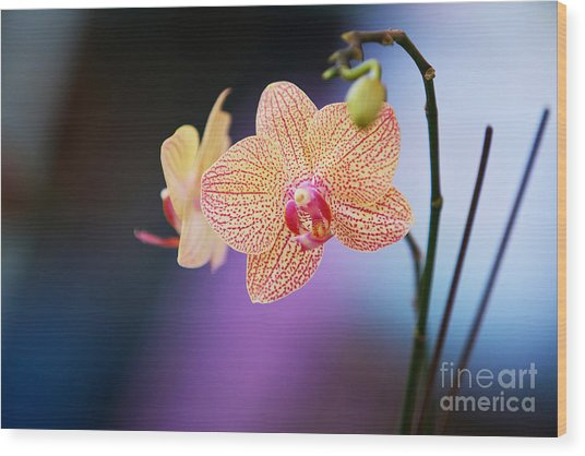 Peach Orchid Wood Print