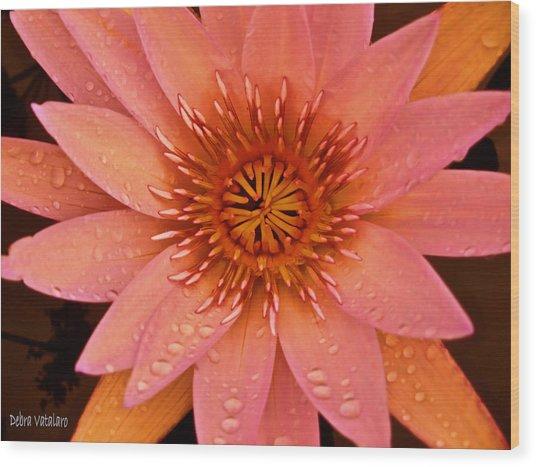 Peach Raindrop Bloom Wood Print by Debra     Vatalaro