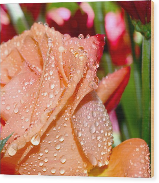 Peach Rose Wood Print by Michelle Armstrong
