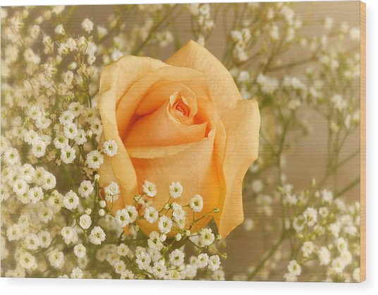Peach Rose With Baby's Breath Wood Print