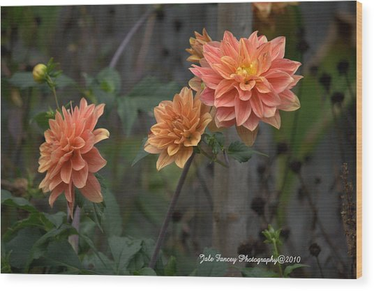 Peachy Petals Wood Print