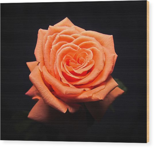 Peachy Rose Wood Print