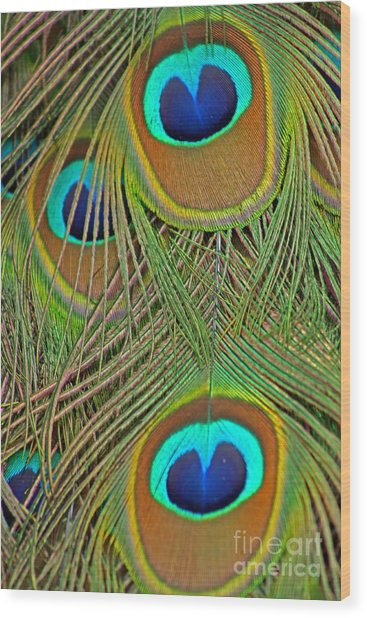 Peacock Feather 2 Wood Print