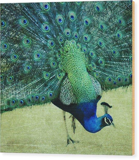 Peacock Pride Wood Print