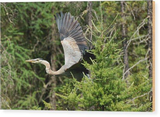 Peek A Boo Heron Wood Print