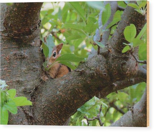 Peeking Chipmunk Wood Print