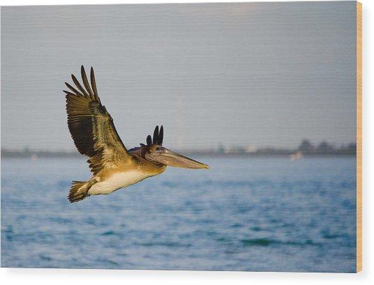 Pelican Wood Print by Mike Rivera