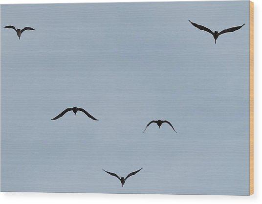 Pelicans In Flight Wood Print by Lorri Crossno