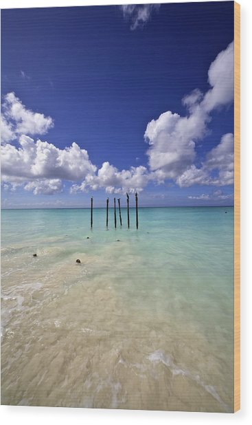 Pelicans Of Sunny Aruba Wood Print