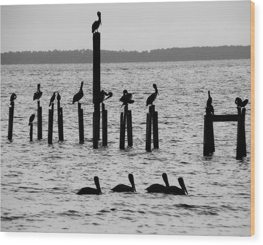 Pelicans On Posts Wood Print by Judy Wanamaker