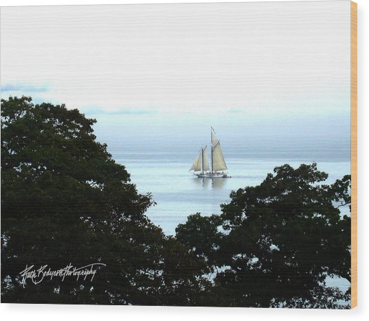 Penobscot Bay Sailing Wood Print by Ruth Bodycott
