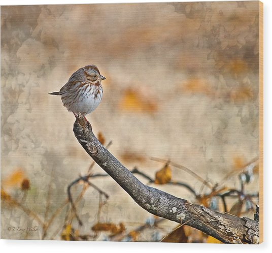 Perched High - Baby Sparrow Wood Print
