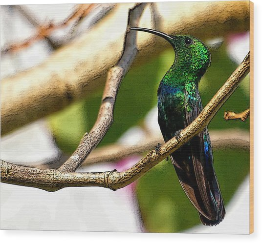 Perched Humming Bird  Wood Print