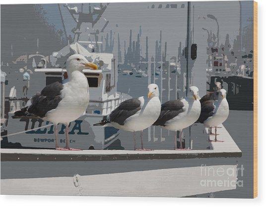 Perched Seagulls Wood Print