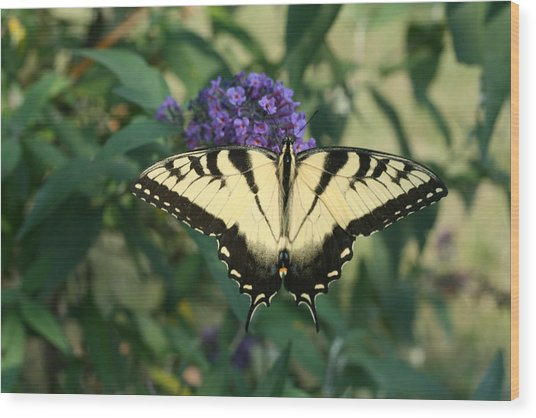Perfectly Aligned Butterfly On Butterfly Bush Wood Print by Bonnie Boden