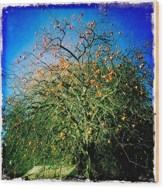Persimmon Tree Wood Print