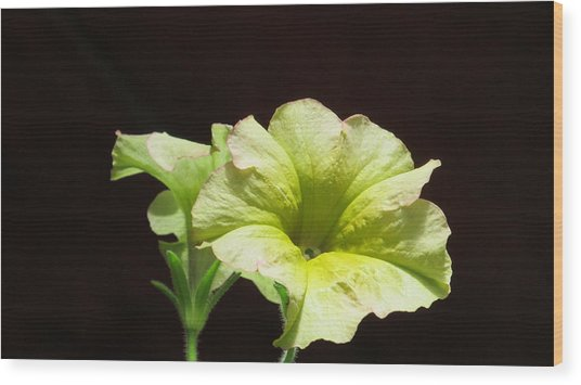 Petunia Light Wood Print