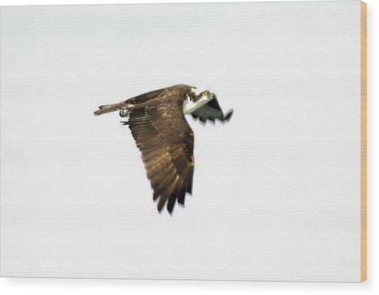 Phantom Of The Osprey Wood Print