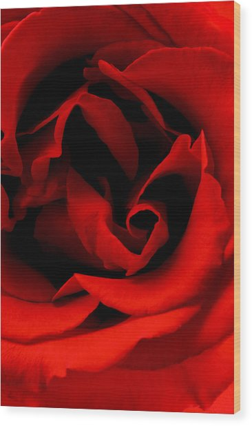 Photograph Of A Red Rose Wood Print