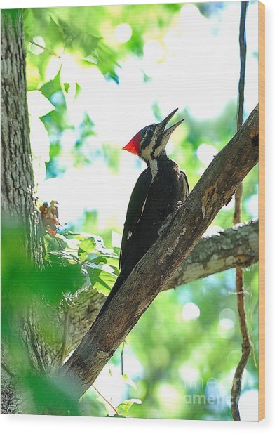 Pilated Woodpecker With Firey Knot Wood Print by Wayne Nielsen