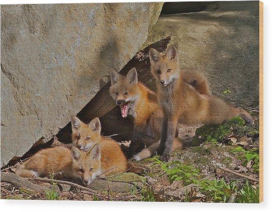Pile Of Pups Wood Print