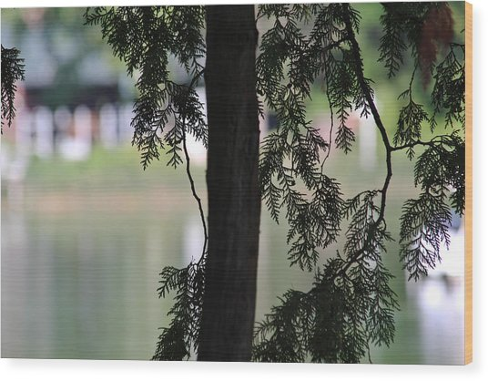 Pine Branch Over The River Wood Print by Janet Mcconnell