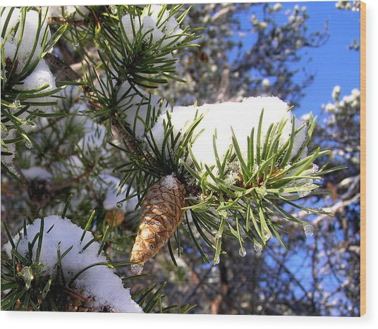 Pine Cone In Winter Wood Print