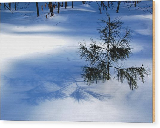Pine Shadow Wood Print